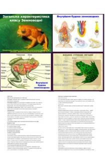 Рубрика: Биология 8 класс